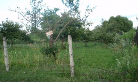 Земя в регулация за продажба в с. Добърско